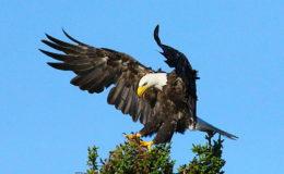 Eagle Landing_1